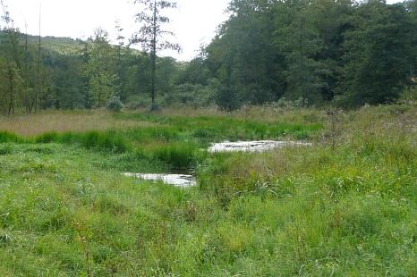 Sommerwiese mit zwei Tümpeln. Im Hintergrund Wald.