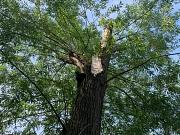 Astbruch am Trojedamm: Durch Stürme im Frühjahr 2019 wurden einige Bäume so beschädigt, dass nun jederzeit die Gefahr herabstürzender Äste oder umstürzender Bäume besteht. Die Stadt Marburg hat daher aus Sicherheitsgründen die Pfade hinab zum Lahnufer ges