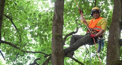 Das Foto zeigt einen Mitarbeiter des DBM, der sich mit Hilfe seiner Kletterausrüstung bis in die Baumkrone vorgearbeitet hat.©DBM
