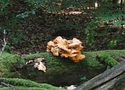 Pilz an einem abgestorbenen Baumstamm
