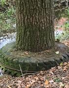 Baumring am Zückenberg