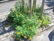 Baumscheibe mit bunter Blumenansaat