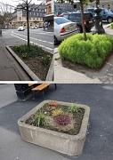 Beispiele für Baumpatenschaften