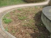 Bepflanzung am Friedhof Hermershausen_vorher