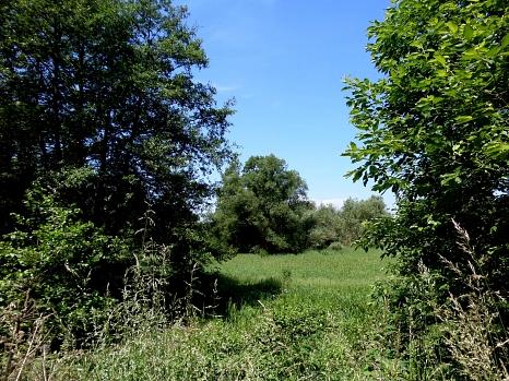 Blick auf eine Feuchtwiese mit Baumbestand©Universitätsstadt Marburg