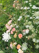 Blütenbild mit Rosen und Wildkräutern©Universitätsstadt Marburg FD Stadtgrün Celia Meggers