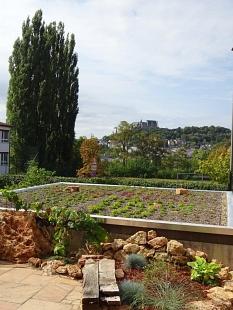 Ein begrüntes Dach in der Universitätsstadt Marburg.©Irena Ziegler