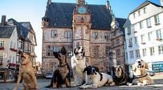 Dobby ist drei und Lux schon 17 Jahre alt. Chuka hat drei Beine und mag Liese, Kim und Jerry. Alle sechs sind aktenkundig – in den Hundesteuerakten der Stadtverwaltung, die nun digitalisiert werden.