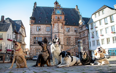 Dobby ist drei und Lux schon 17 Jahre alt. Chuka hat drei Beine und mag Liese, Kim und Jerry. Alle sechs sind aktenkundig – in den Hundesteuerakten der Stadtverwaltung, die nun digitalisiert werden.©Patricia Grähling, Stadt Marburg