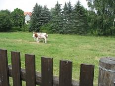 Eine Kuh steht auf einer Wiese im Dorf©Bernd Weimer