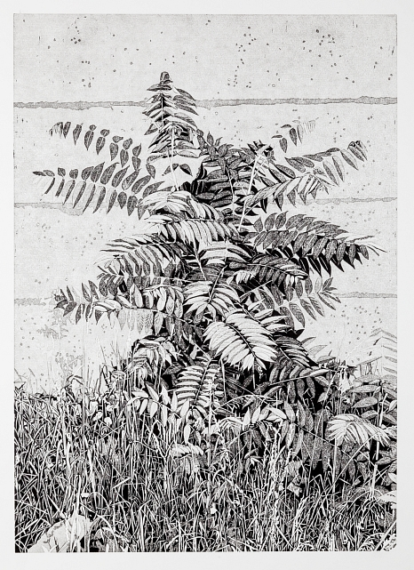 Abbildung des Werkes Essigbaum, Linolschnitt des Künstlers Philipp Hennevogl aus dem Jahr 2017 schwarz-weiß, Pflanze im Gras vor Steinwand©Philipp Hennevogl