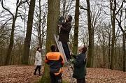 Bürgermeister Kahle hängte den letzten der 35 Fledermauskästen in vier Metern Höhe auf. Mit dabei die Fachdienstleiterin Stadtgrün, Klima- und Naturschutz, Marion Kühn, Florian Zilm vom Forstamt Kirchhain (r.) und der Forstwirt-Auszubildende Dominik F