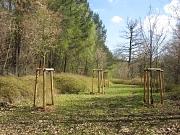 Friedhof Marbach