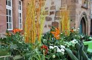 Die Pflanzgefäße in der Altstadt greifen mit ihrer weiß-orangen Bepflanzung das Thema Hexenjahr auf.