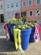 Blaue Pflanzgefäße mit bunten Frühjahrsblüher in Zwischenhausen