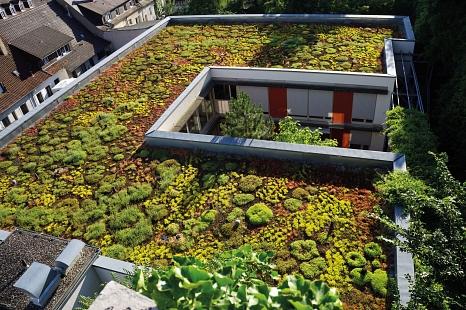 Die Ansicht eines begrünten Daches von oben. Man erkennt die Erde und viele niedrige grüne Pflanzen.©miss_mafalda