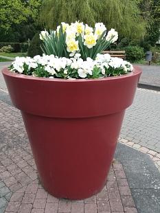 Hauptfriedhof, hohes, weinrotes Pflanzgefäß mit weißblühenden Frühjahrspflanzen©Universitätsstadt Marburg, FD Stadtgrün Silvia Vignoli