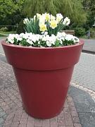 Hauptfriedhof, hohes, weinrotes Pflanzgefäß mit weißblühenden Frühjahrspflanzen