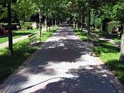 Hauptfriedhof Weg im Schatten
