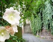 Es grünt so grün in Marburg im Sommer: Auch während der Vogelbrutzeit dürfen Besitzerinnen und Besitzer von Gärten und Grundstücken ihre Bäume, Hecken und Sträucher maßvoll zurückschneiden, um den Bestand zu pflegen und die Verkehrssicherheit für Passanti