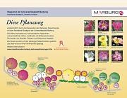 Kappesgasse, Infoschild Rosenpflanzung
