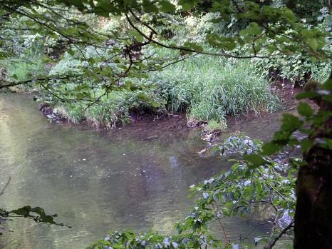 Durch belaubte Äste hindurch auf das gegenüberliegende, mit gras bewachsene Lahnufer. Im Vordergrund das Gewässer.