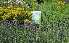 """Zehn beschilderte Beete mit verschiedenen Schwerpunkten erfreuen die Sinne bei der Ausstellung """"Magisches Grün"""" – wie hier das Duftbeet.©Thomas Steinforth, Stadt Marburg"""
