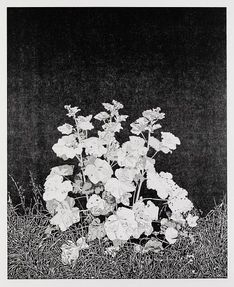 """Abbildung des Werkes """"Malve"""", Linolschnitt des Künstlers Philipp Hennevogl aus dem Jahr 2019 schwarz-weiß, Pflanze/Malve wächst auf Gras vor schwarzem Hintergund, Grashalme sehr detailliert in starkem Schwarz-Weiß Kontrast erkennbar©Philipp Hennevogl"""