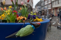 30 solcher Pflanzengefäße schmückten die Marburger Innenstadt.