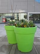 Grüne Pflanzgefäße mit Frühlingsblüher beim Marburger Frühling an der Stadthalle 2017