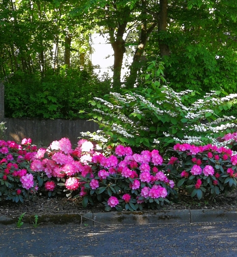 Neue Frühlingsbepflanzung an der Kapelle am Rotenberg©Universitätsstadt Marburg