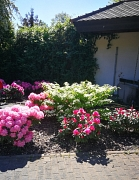 Frühlingsbepflanzung an der Kapelle am Rotenberg mit Rhododendronbüschen.