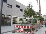 Neue Baumpflanzungen am Erwin-Piscator-Haus entlang der Savignystraße