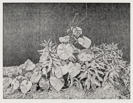 """Abbildung des Werkes """"Oase"""", Linolschnitt des Künstlers Philipp Hennevogl aus dem Jahr 2020 schwarz-weiß, fein detailiert erkennbare Pflanzenvielfallt auf körnigem Boden vor schwarzem Hintergrund©Philipp Hennevogl"""
