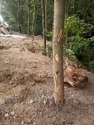 Baustellenbedingter Schaden an einem Baum