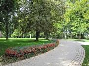 Schloßpark, Blick auf alten Baumbestand im Sommer