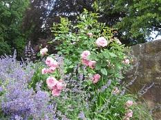 Schloßpark, Rosenpflanzungen mit Begleitstauden©Universitätsstadt Marburg Fachdienst Stadtgrün, Celia Meggers