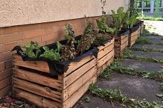 Große quadratische Kisten gefüllt mit Erde und Pflanzen.©Universitätsstadt Marburg