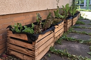 Große quadratische Kisten gefüllt mit Erde und Pflanzen.