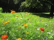 Bunte Sommerblumenaussaat Im Park