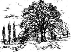 """Zeichnung der """"Alten Eiche""""©Universitätsstadt Marburg - Dagobertshausen"""