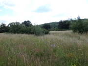 Blumenwiese mit Hecken. Im Hintergrund Wald.
