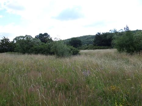 Blumenwiese mit Hecken. Im Hintergrund Wald.©Universitätsstadt Marburg
