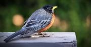 Die Naturschutz-Erlebnistage bieten vom 29. April bis 8. Mai eine gute Gelegenheit, die Faszination der Natur zu entdecken und unter anderem die Vogelwelt zu erkunden.