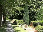 Weg auf dem Hauptfriedhof mit Grabstellen