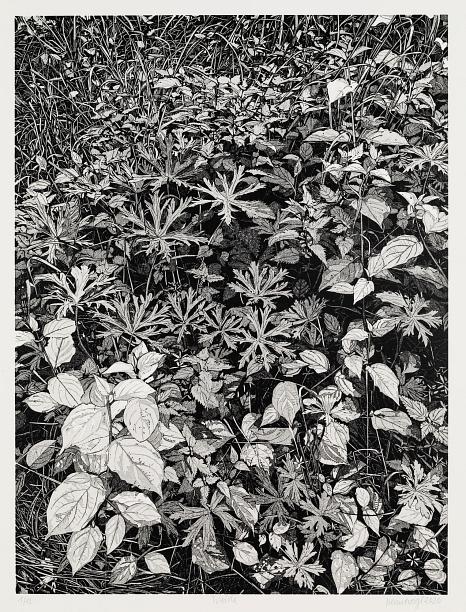 """Abbildung des Werkes """"Weide"""", Linolschnitt des Künstlers Philipp Hennevogl aus dem Jahr 2020 schwarz-weiß, vielfältige Pflanzen gezeigt aus der Vogelperspektive, sehr dtaillierte, feine Darstellung©Philipp Hennevogl"""