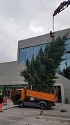 Weihnachtsbaum Aufstellung am Erwin-Piscator-Haus
