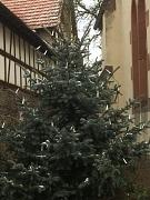 Weihnachtsbaum Hermershausen
