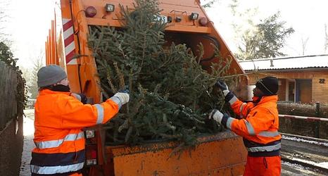 Das Foto zeigt Mitarbeiter des DBM beim Laden von Weihnachtsbäumen.©DBM, Sonja Stender