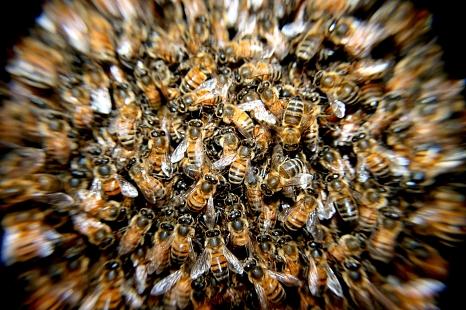 Der Aktionstag zum Weltbienentag soll das öffentliche Bewusstsein für Bienen und Insekten stärken.©Pixabay
